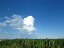 White and grey clouds in blue sky. Stormy rainy weather forecast. Air, cloudy sky, clouds, gloomy sky concept. Fair weather cumulus clouds over a maize field stock image