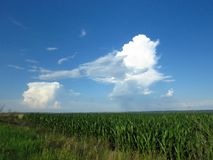 White and grey clouds in blue sky. Stormy rainy weather forecast. Air, cloudy sky, clouds, gloomy sky concept. Fair weather cumulus clouds over a maize field stock photography