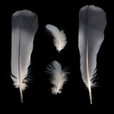 White and grey feathers Stock Photos