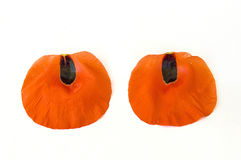 On the white ground are poppy flowers, poppy leafs, the best poppy flowers for projects and designs, Stock Photos