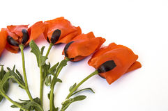 On the white ground are poppy flowers, poppy leafs, the best poppy flowers for projects and designs, Stock Photo