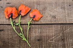 On the white ground are poppy flowers, poppy leafs, the best poppy flowers for projects and designs, Stock Image