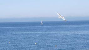 White gull flies on background of blue sea with rocky coast. Action. Flight of white seagull in clear sky on background. Of sea landscape with rocks is stock photos