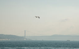White gull in focus on the background of the city and the Bosphorus Bridge, Strait of Bosporus. Istanbul, Turkey stock photos