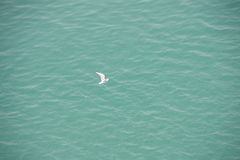 White gull over blue water Royalty Free Stock Photo