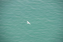 White gull over blue water Stock Images
