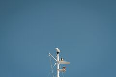 White Gull Sitting on Pole Royalty Free Stock Images