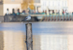 White gull is standing on a wooden pile in the middle of the sun stock photography