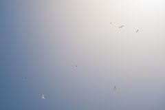 White gulls hover in the sky over the sea Stock Photo