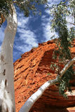 White Gum Tree in front of Red Outback Cliffs Royalty Free Stock Photography