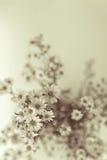 White Gypsophila. Retro style image of Gypsophila stock photos