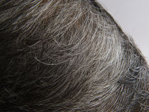 White haired of head Stock Photography