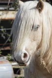 Horse with Bangs Stock Images