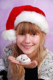 White hamster for christmas Royalty Free Stock Image