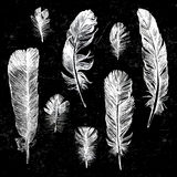 White hand drawn feathers set Royalty Free Stock Photography