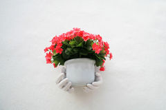 White hand holding red flowers on the pot Stock Photography