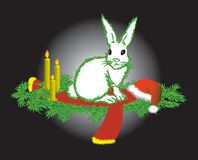 The white hare Royalty Free Stock Photography