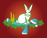 The white hare Royalty Free Stock Image