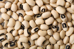 White haricot beans background Stock Photography