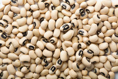White haricot beans background Royalty Free Stock Images