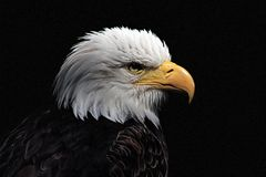 White-headed eagle. Heraldic bird of the United States of America royalty free stock photos