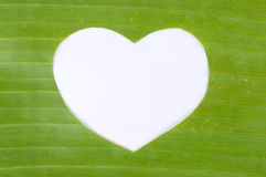 White heart in green banana leaf royalty free stock image