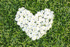 White heart made from daisy flowers Stock Photo