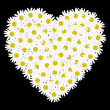 White heart shaped daisy flower Royalty Free Stock Photography