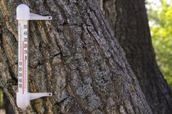 Thermometer on a tree. Hot Summer. royalty free stock photos