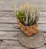 White heather in a basket Royalty Free Stock Images