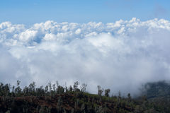 White heavy clound with trees in the foreground at Ijen Crater, East java, Indonesia. White heavy clound with trees in the foreground royalty free stock image