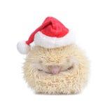 White hedgehog like a ball. Royalty Free Stock Photos