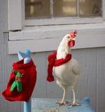 White hen chicken Stock Photo