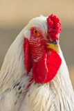 White hen. Stock Photo
