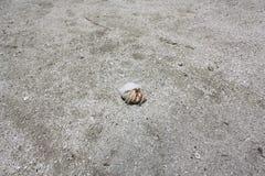 White hermit crab - Paguroidea stock image