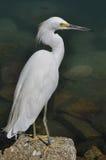 White heron. Fishing in marina stock photography