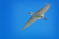 White Heron Blue Sky Stock Photo