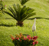 White heron in the field Stock Photos