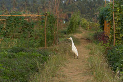 White heron in the garden. Surface of the field, bright colors, peasant gardens, grow, cultivate, fertility, flat beds, field design, fertility, soil, food Royalty Free Stock Image
