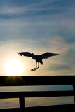White Heron Landing. White heron (great egret) landing on pier railing against sunset Stock Images