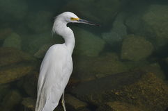 White Heron in Marina. White Heron on the shore stock photo