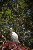 White heron stays on tree Stock Images