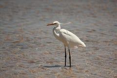 White heron Stock Photos