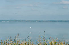 A white heron wader hern is flying above the lake. Naroch Stock Photo