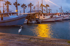 White heron waterside in harbor Royalty Free Stock Photography