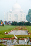 White herons in front of Taj-Mahal Palace Stock Photos