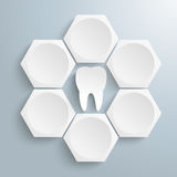6 White Hexagons Cylce Tooth. Infographic with honeycomb structure and tooth on the gray background Royalty Free Stock Photos