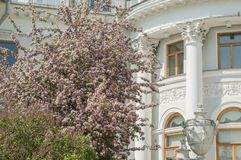 Spring blossoms on a sunny day in a park near palace. White historical building in a park in Saint Petersburg. White historical building in a park in Saint stock photos
