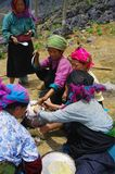 White Hmong women's group raised the lunch. Hmong women's group raised the white lunch. The fields are far from their village in the mountains. They left early Royalty Free Stock Image