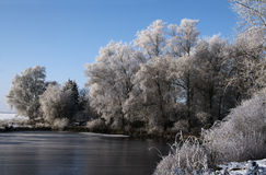 White hoar frost on the trees at the shore of a frozen lake, bea Royalty Free Stock Photography